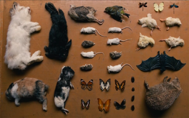 Image of dead animals from The End of the Fucking World, directed by Jonathan Entwistle
